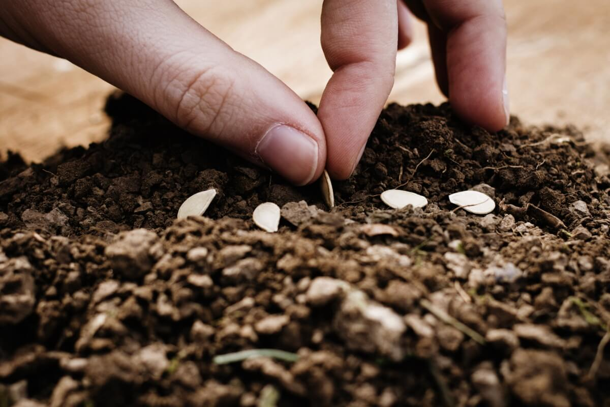 種まきの方法